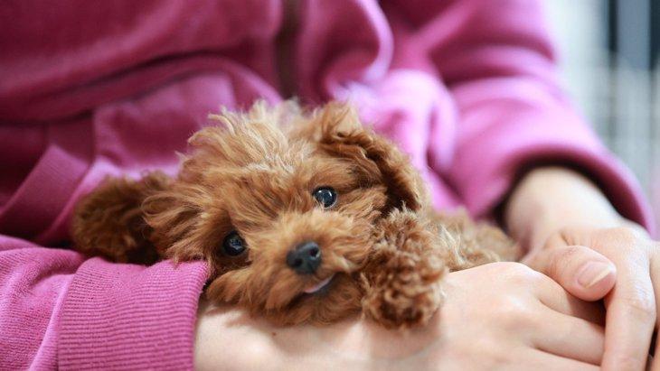 犬の抱っこされてる時の心理5選♡気を付けるべきポイントは?