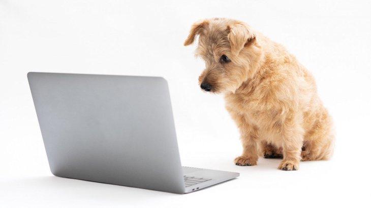 犬もベイビー・ヨーダが好き?留守番中に流すと犬が落ち着く番組
