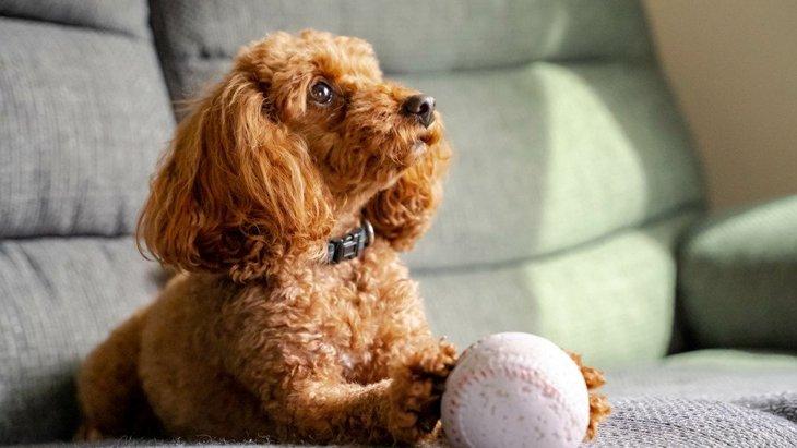 犬が飼い主に『おねだり』をしている時にする行動や態度6選