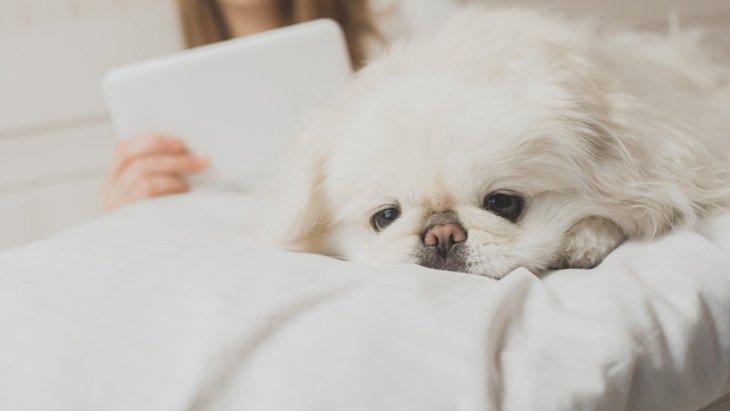 犬を飼う前に考えて!後悔する可能性がある5つの大変なこと
