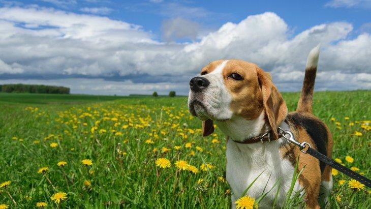 人見知りな犬のお散歩を楽しくするコツ3選