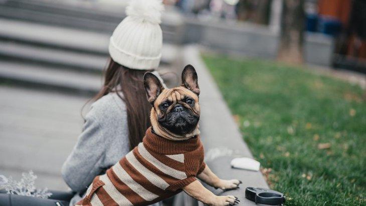 冬に犬の散歩をする時に注意すべき4つのポイント