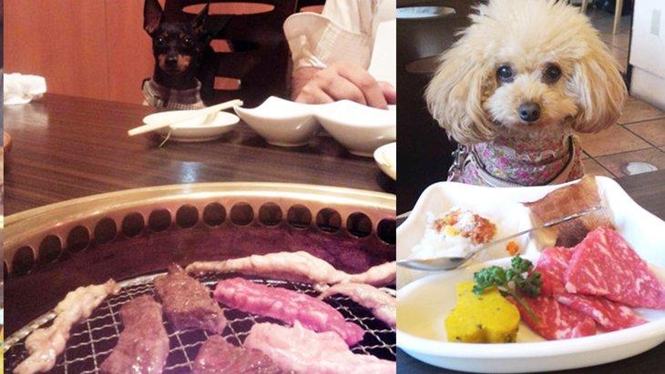 愛犬と焼肉が食べられる!夢のようなお店『和牛焼肉うしすけ』のインスタが熱い!(まとめ)