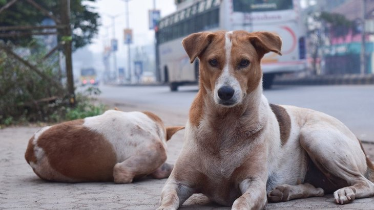 訓練を受けていない野良犬も人間のジェスチャーを理解するという研究結果