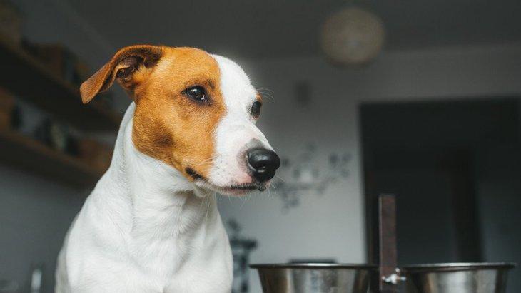 犬の食器の高さ、最も正しい位置はどこ?測り方や食器を選ぶコツを解説