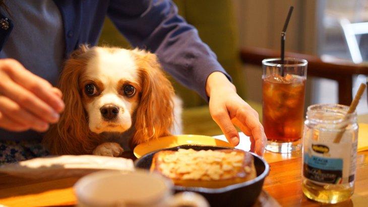 三重県のドッグカフェおすすめ10選!犬連れでランチが楽しめるペット可の人気店舗