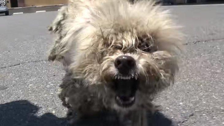 足に大怪我をした路上で暮らす小型犬は、必死で走って抵抗した