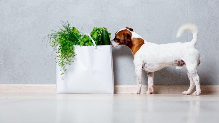 犬は水菜を食べられる!手作りご飯のレシピや注意点まで