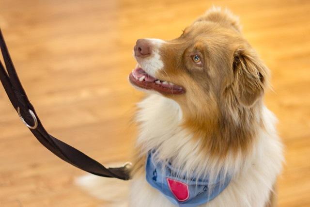 シッターやホテルに愛犬を預ける際の確認ポイント10項目と見極め方