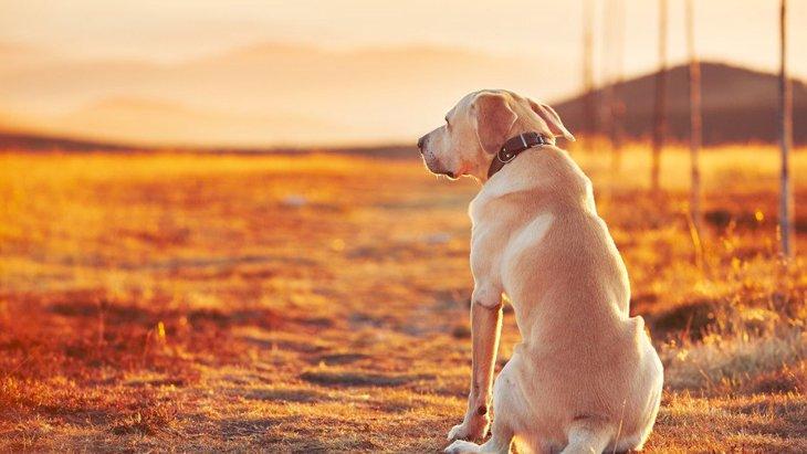都会で暮らす犬と地方で暮らす犬の違い3つ