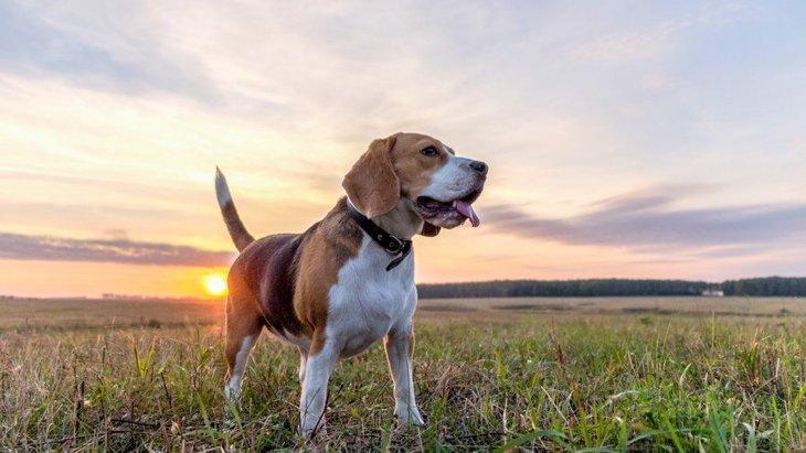 アンテナ発動!犬が危機感を抱いたときの仕草や行動4つ