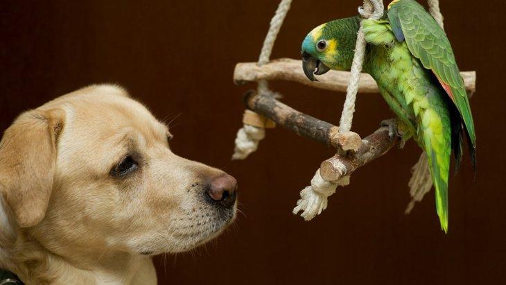 犬とインコは一緒に飼える?相性や注意点について