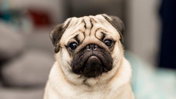 暑くもないのに犬の呼吸が荒い原因4つ!病気になっている時のサインは?