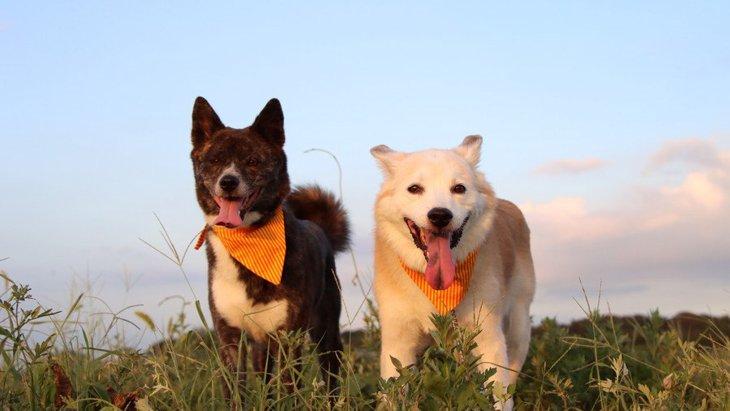 犬の多頭飼いでしてはいけない『NG行為』4選