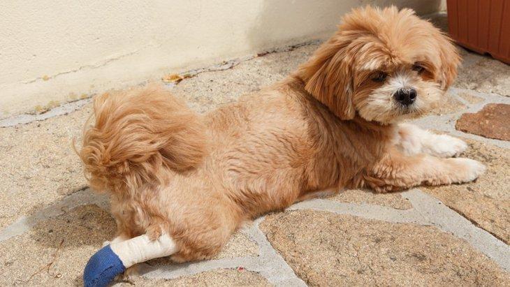 犬の下半身に起こる疾患と対策や予防について