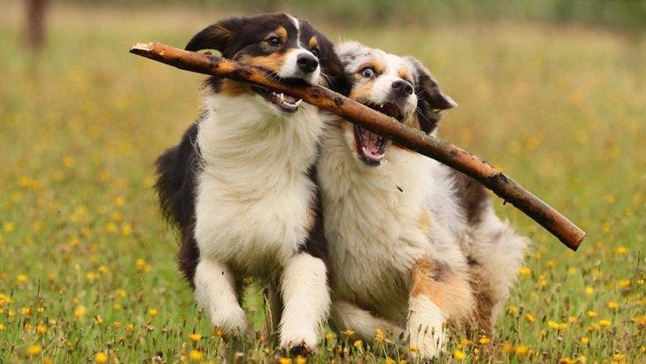 仲良く遊んでね!犬同士で遊んでいる時の行動5つ