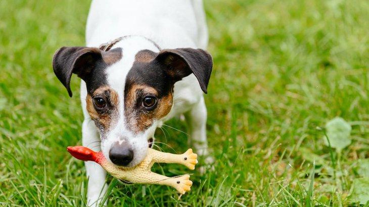 危険大!犬が怪我をする可能性があるおもちゃとは?