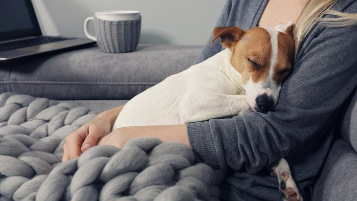 飼い主の前で頑張りすぎちゃう愛犬の心を休ませてあげる方法