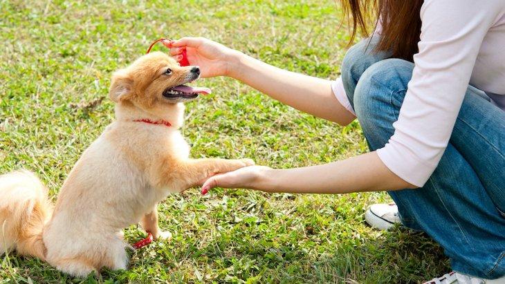 犬が勝手に『お手』をしてくる心理4つ