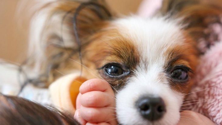 なぜ犬は飼い主に『添い寝』をしてくるの?3つの理由