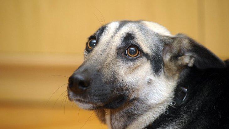 犬が突然怯えるように…その原因や対処法を解説!怖がりさんを克服しよう!