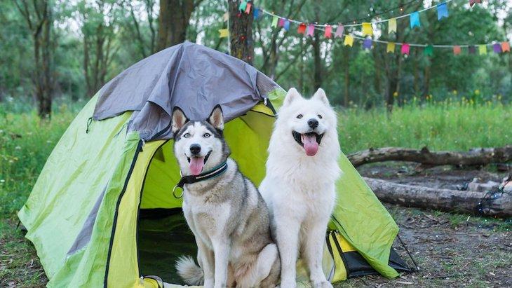 犬にとっての『充実感のある一日』とは?愛犬のリフレッシュにこんなイベントを用意してみては?♡