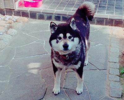 犬と暮らす  ~寄り添い共に生きる事のススメ~