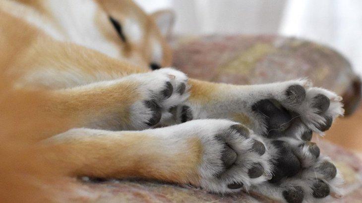 犬の肉球が固くなってしまう原因5つ!予防するためにはどうしたらいい?