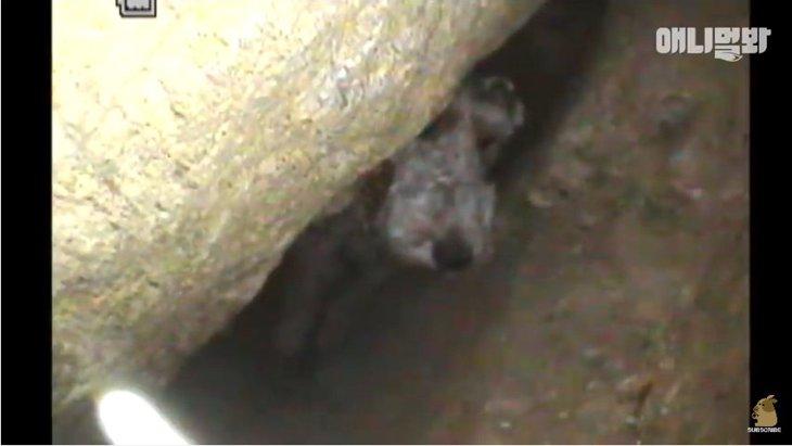 岩に挟まり6日間も出られなかった犬の救出劇