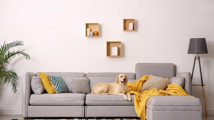 部屋が犬臭くなる4つの原因とは?改善するコツ・簡単な方法を解説