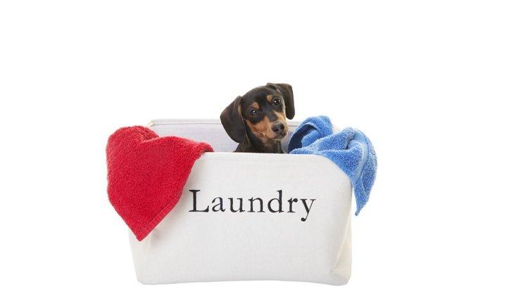 犬のお洋服も、自分の服と洗濯機で洗って大丈夫?注意すべき6つのこと