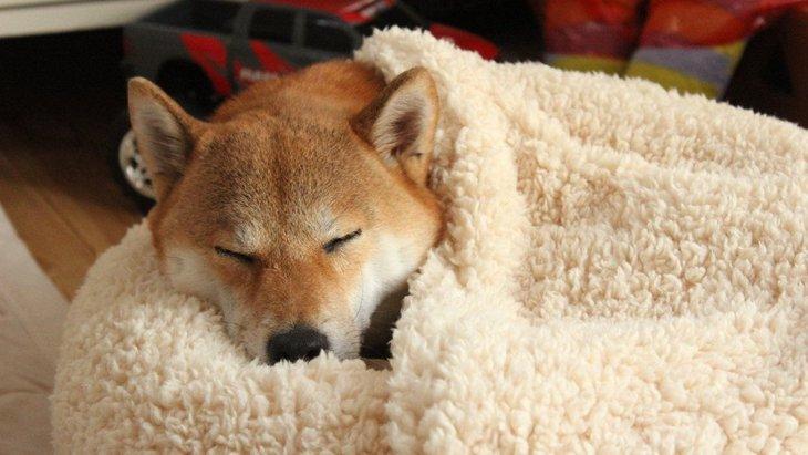 室内犬にとっての良い寝場所とは?