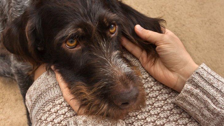 犬が信頼している人に見せる仕草や行動5つ