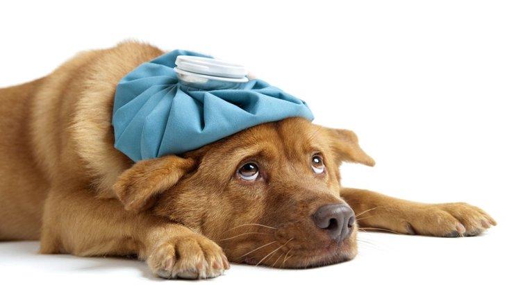 老犬のてんかんの症状と対処法