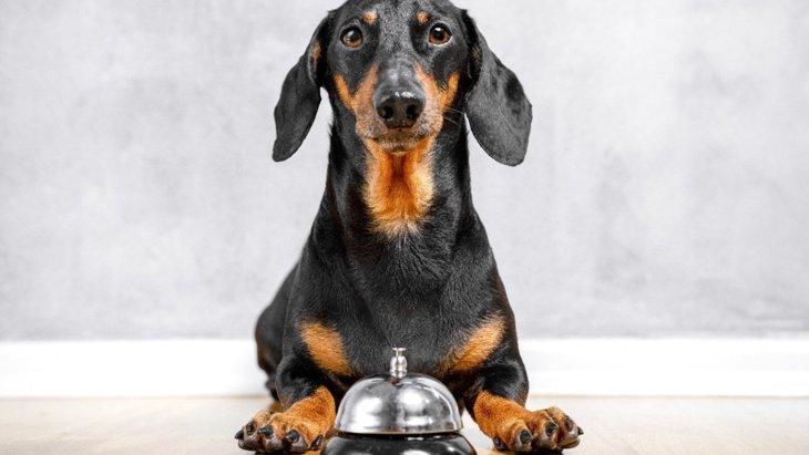 犬の『脳を鍛える』トレーニング2つ!子犬からシニア犬までメリットいっぱい♡