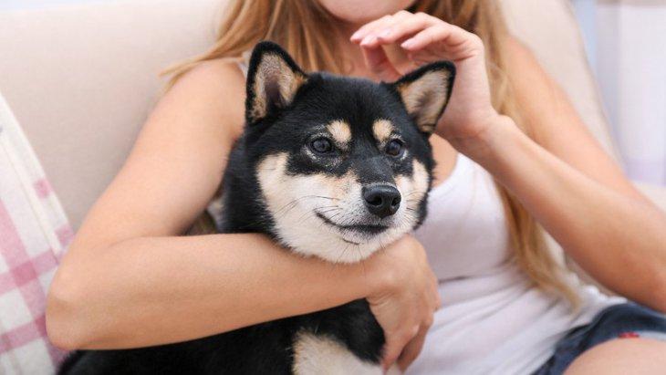 マッサージを受ける柴犬が可愛い!喜ぶテクニック6選