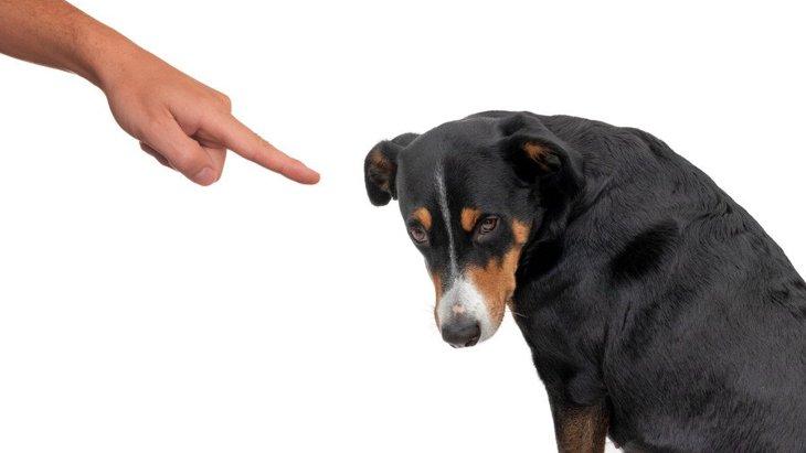 犬を叩くのは絶対NG!体罰がダメな理由と正しい叱り方