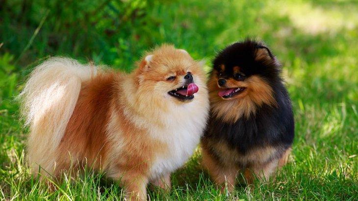 全部知ってたら犬博士!犬の『しっぽ』の形の名前8つ