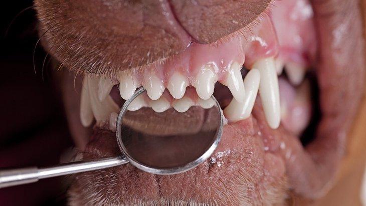 犬が歯ぎしりをする原因と対処法
