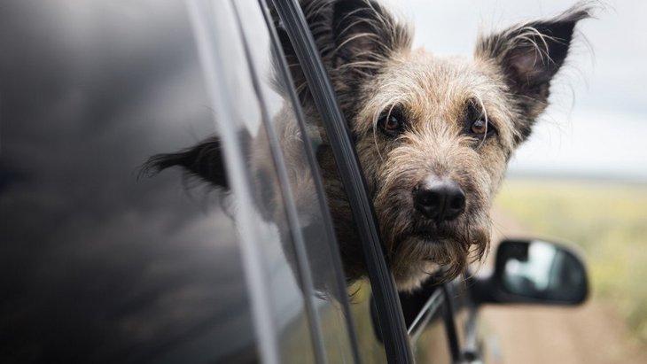 犬が『車酔い』している時に見せる仕草や行動9選!症状別の適切な対処法とは?