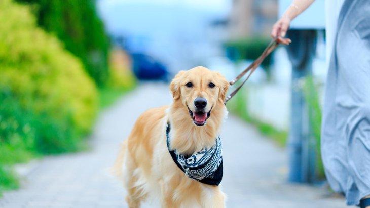 犬へのあいさつだってマナーが必要!初対面でも仲良くなれるコツ