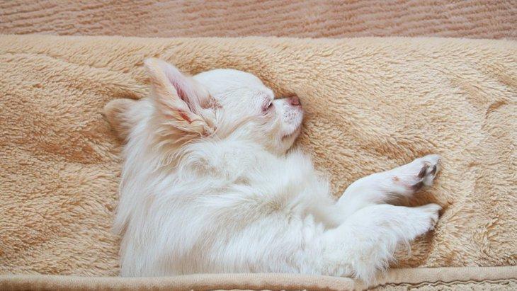 犬が冬に火傷をする原因と応急処置の仕方