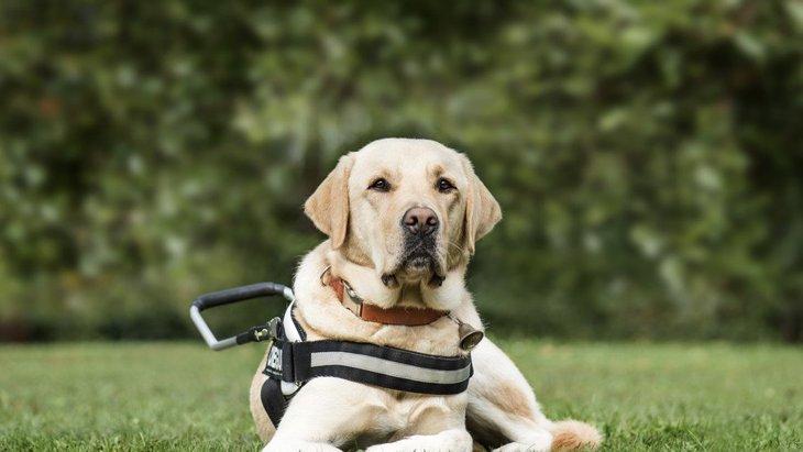 私たちに何ができる?盲導犬を支援する方法3つ