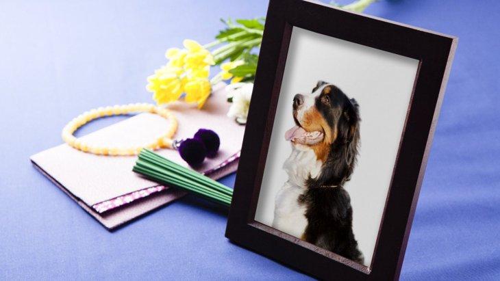 愛犬が旅立った後のケア、アメリカでのペットメモリアル事情