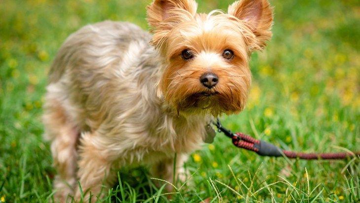 犬がウンチをする時の3つの仕草から読み取る心理