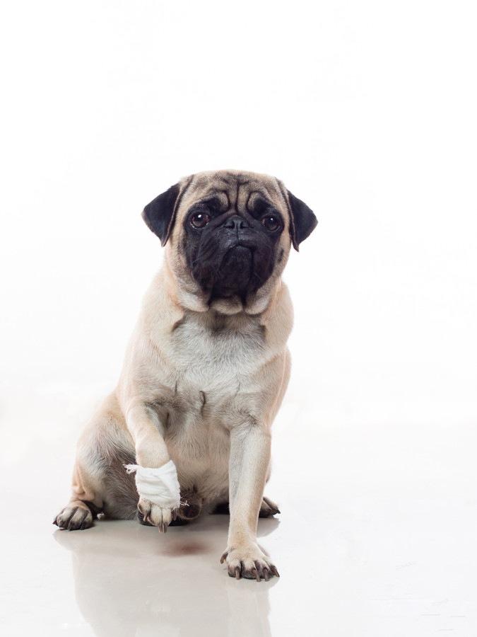 犬が骨折するときによくある3つの原因