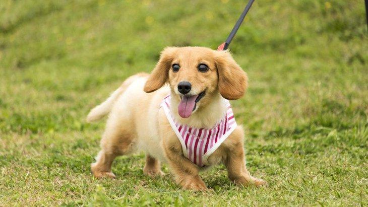 犬を飼ったら絶対に撮っておきたい写真7つ