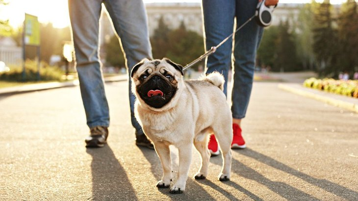 犬の散歩中によくある『トラブル』3つ!他人にも配慮した行動が大切