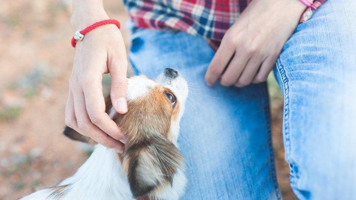 犬が懐いてくれない!主な理由と仲良くなるためのコツを解説