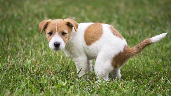 犬がウンチのときに飼い主を見つめる理由4つ
